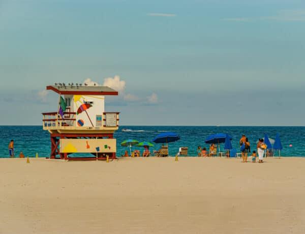 Cestopis Florida